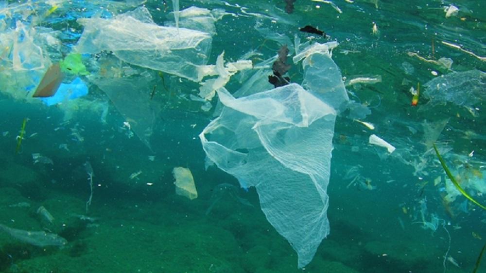Bolsas de plástico en el mar afectan a animales marinos. Foto de Internet