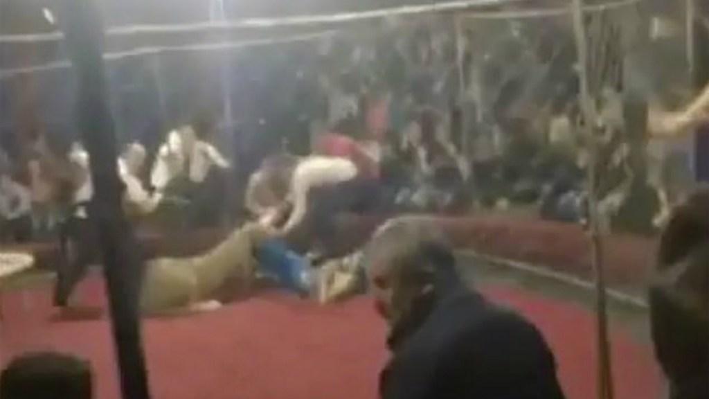 #Video Leona ataca a niña de cuatro años en Rusia - Leona ataca a niña en circo de rusia
