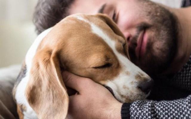 Proponen que mascotas puedan heredar en la Ciudad de México - Diputado de Morena solicitó otorgar derechos de familia a mascotas. Foto de Internet