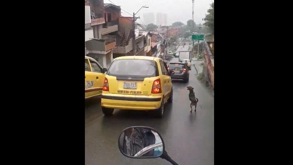 #Video Perro corre detrás de dueños que lo abandonaron - Captura de pantalla
