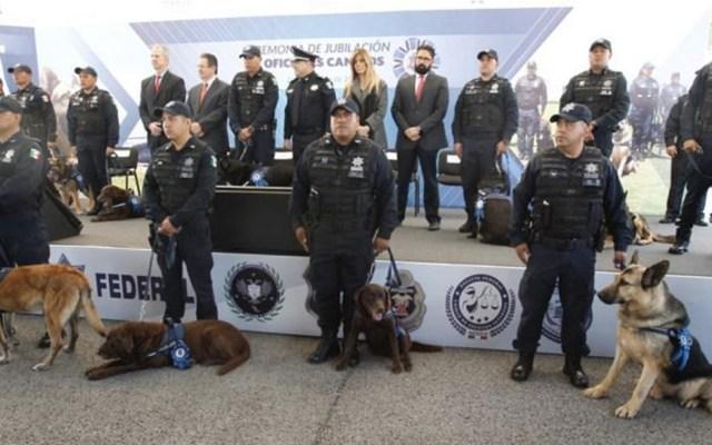 Jubilan a 20 oficiales caninos de la Policía Federal - Foto de PF