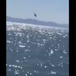 Cae helicóptero de la Marina en el Golfo de California; todos los tripulantes fueron rescatados - #Video Se desploma helicóptero de la Semar en Sonora