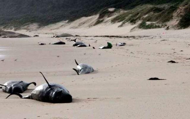 Hallan 28 ballenas muertas en playa de Australia - Foto de internet