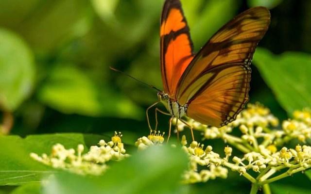 La pérdida de biodiversidad acelera la extinción humana - La ONU enfrentará en Pekín 2020 un reto importante en favor de la biodiversidad. Foto de Internet