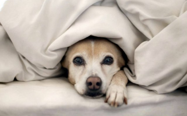 Cómo proteger a su mascota del frío - Foto de Los Andes