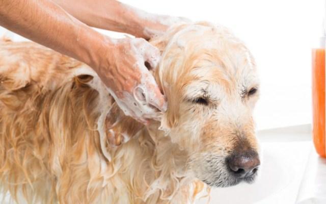 Poco recomendable bañar a los perros en invierno - es malo bañar a los perros en invierno