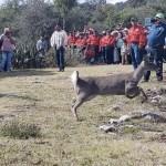 Liberan en Hidalgo 20 venados en zona de pumas