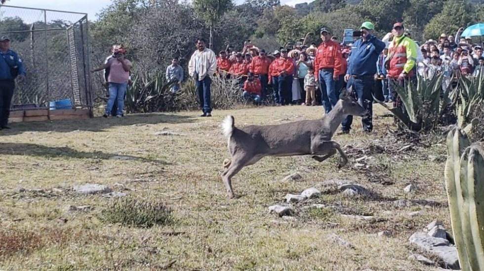 Liberan en Hidalgo 20 venados en zona de pumas - Foto de @amdigitalhgo