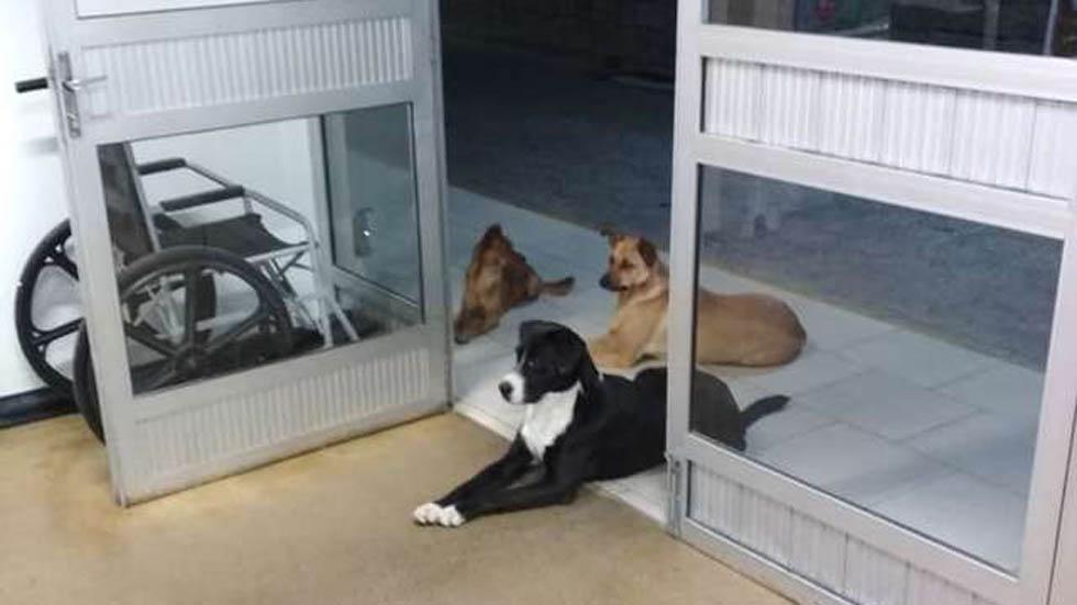 Perros de César esperándolo a la salida del hospital. Foto de @anacrismamprim