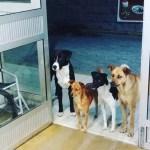 #Viral Perros hacen guardia en hospital por indigente