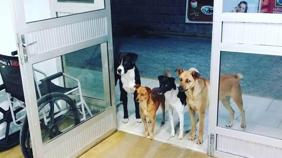 #Viral Perros hacen guardia en hospital por indigente - Perros esperando a su dueño en hospital de Brasil. Foto de @anacrismamprim