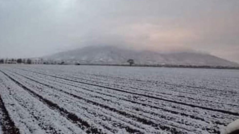Frío afecta más de 50 mil hectáreas de hortalizas en Sonora - Cultivos dañados por la nieve. Foto de Internet