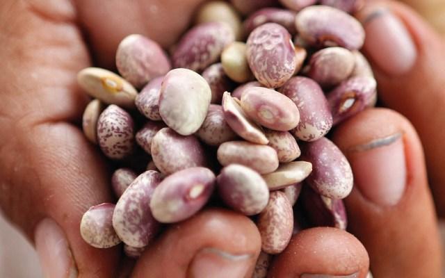 Presentan Precios de Garantía para pequeños y medianos productores - Foto de @SADER_MEX
