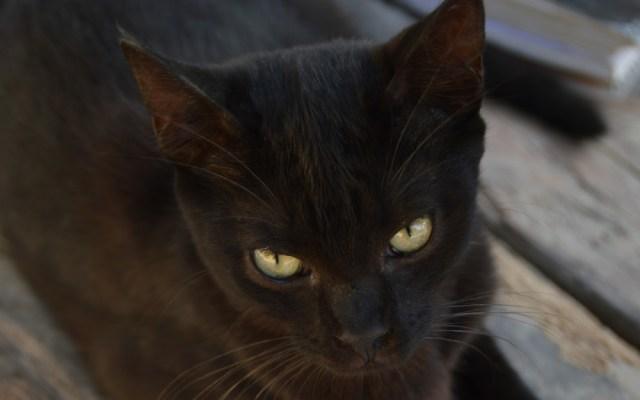 Descubren a gatos infectados con la peste en Wyoming - gatos peste wyoming