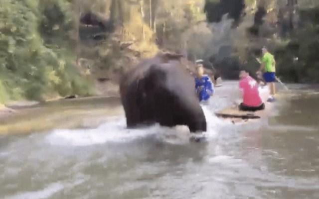 #Video Elefante bebé ataca a turistas en un río de Tailandia - Captura de pantalla