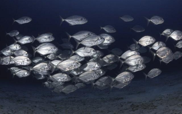 Calentamiento de mares provoca disminución de población de peces - Foto de Milos Prelevic @prelevicm