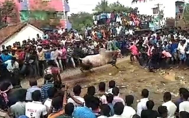#Video Toro embiste a multitud durante celebración religiosa en India - Foto de Viral Press