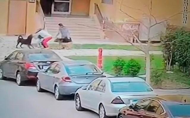 #Video Perros atacan brutalmente a niño hasta que una mujer lo salva - Captura de pantalla