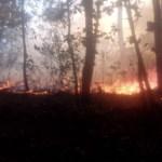 Reportan dos incendios en reservas naturales protegidas de Michoacán - Foto de @Silvano_A
