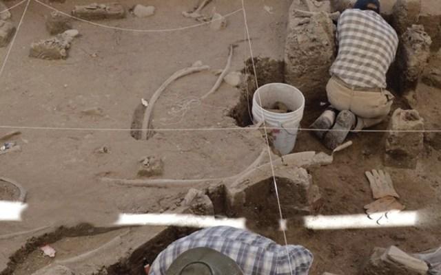 Descubren restos de mamuts en Tultepec - Foto de Notimex