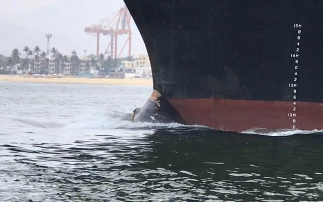 Barco arrastra cadáver de ballena hasta puerto en Manzanillo, Colima - Foto de @berthareynoso