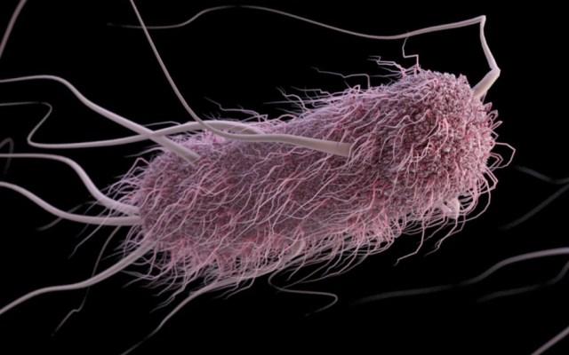 EE.UU. reporta brote bacteriano en cinco estados con 72 personas afectadas - Foto de CDC