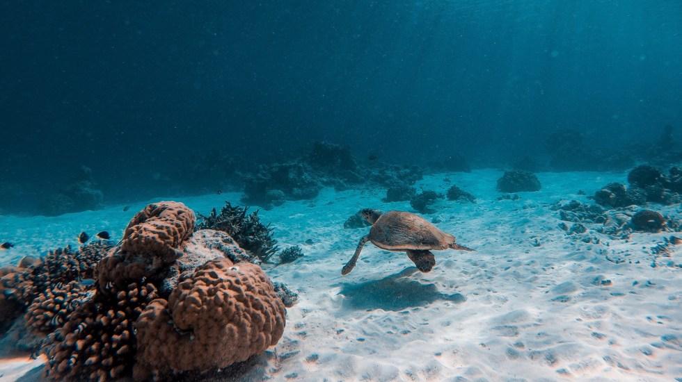 Un millón de especies correrán peligro de extinción pronto: ONU - Ecosistema marino. Foto de Mohamed Ahzam / Unsplash