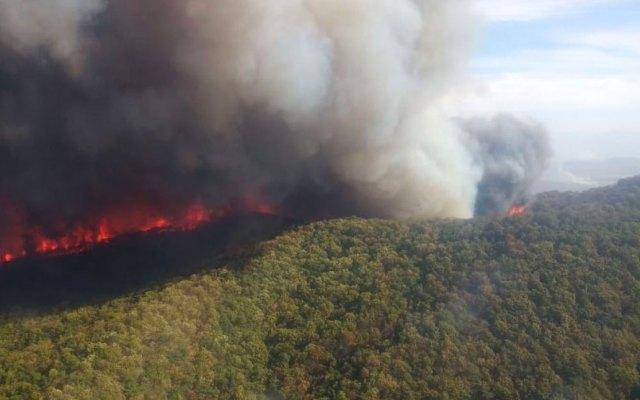 Contienen incendio en Bosque La Primavera, Jalisco - Foto de Milenio