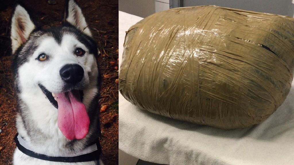 Guardería entrega a dueña el cadáver embolsado de su perra - Como ingresó Nova / Cómo la entregaron a su dueña. Foto de @kirstenkinch