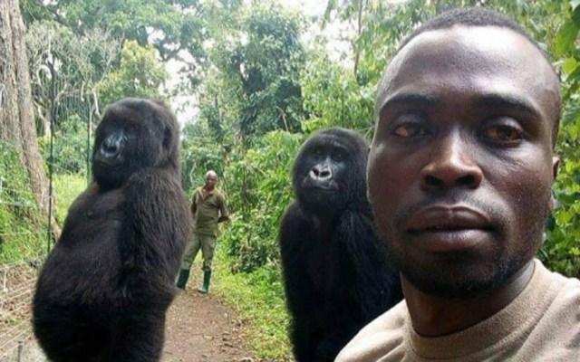La historia detrás de la selfie con dos gorilas - Selfie con gorilas. Foto de @virunga