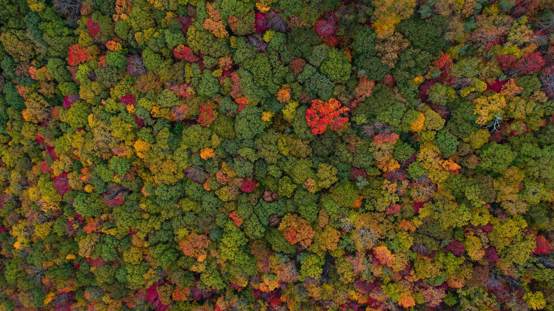 Vista aérea de un bosque. Foto de Nathan Anderson / Unsplash