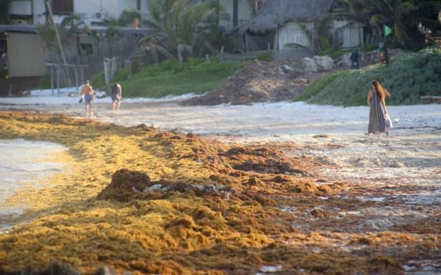 Prepara gobierno federal plan contra sargazo - Foto de Notimex.