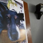 Bomberos de Jalisco montan guardia de honor por muerte de su mascota - Altar a Crucito. Foto de @GobiernoJalisco