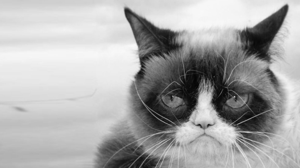 Muere la gata del meme 'Grumpy Cat' - grumpy cat