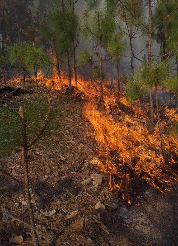 Los incendios forestales afectan en su mayoría a matorrales y pastizales. Foto de Conafor