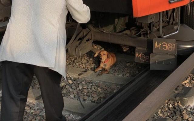 Rescatan a perro en estación del Metro; ya fue entregado a su dueña - Foto de STC Metro