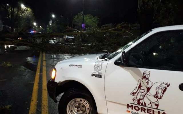 Tromba en Morelia deja un saldo de 10 árboles y un espectacular caídos - Foto de Quadratín