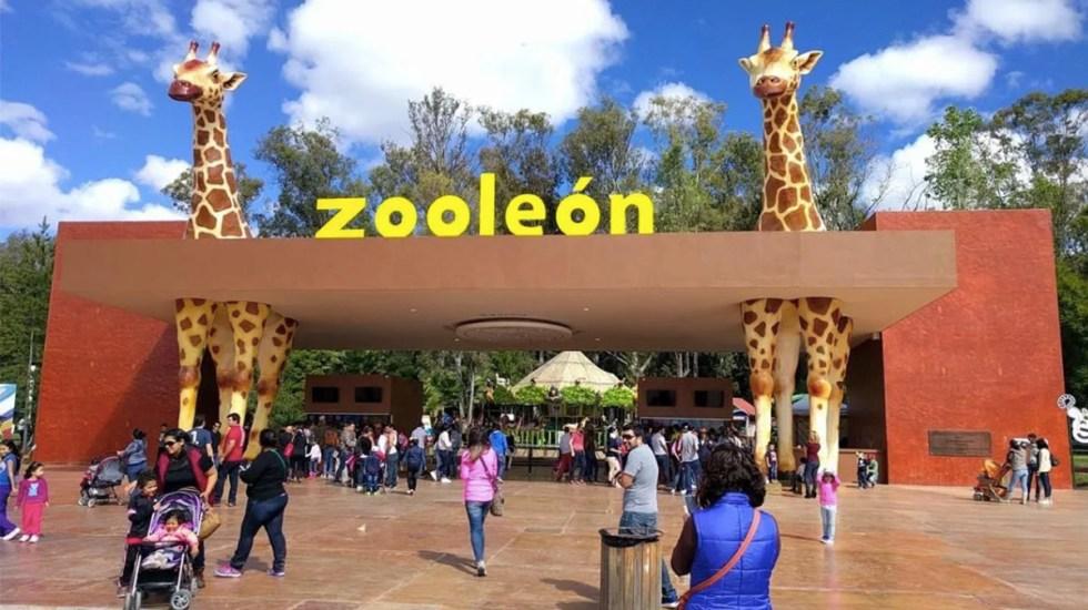 Muere pingüino en el Zoológico de León - muere pingüino en zoológico de león