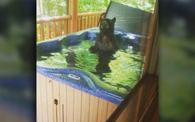 Pareja sorprende a osos en jacuzzi de su cabaña durante vacaciones - Oso en jacuzzi de cabaña. Foto de Elizabeth Strickland