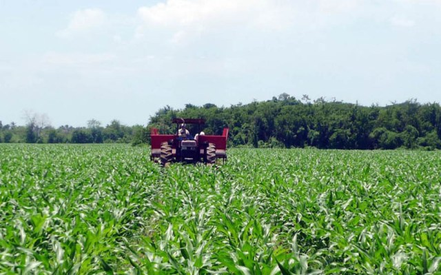IMSS registra más de 30 mil nuevos empleos en abril - Sector agropecuario en México. Foto de Milenio (Archivo)