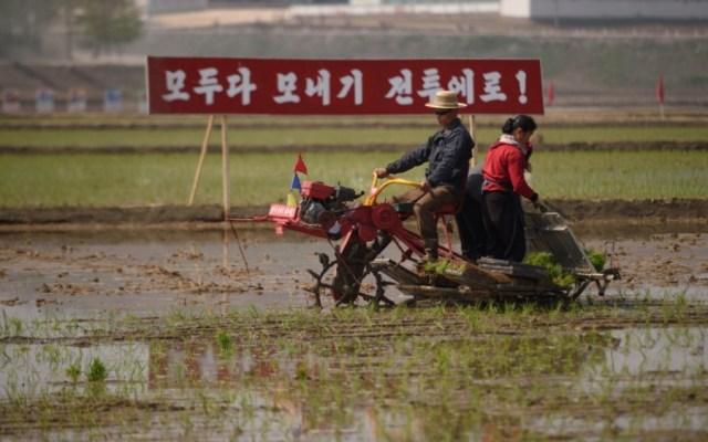 Alertan por riesgo de hambruna tras sequía extrema en Corea del Norte - sequía corea del norte