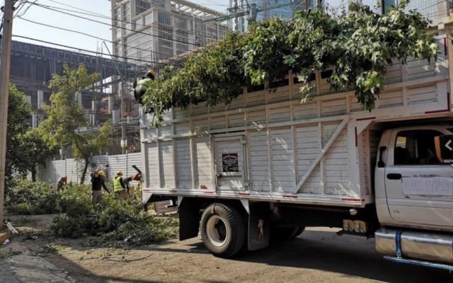 Mitikah actuó con dolo al talar árboles: Sheinbaum - Foto de @AnacaniDesigner