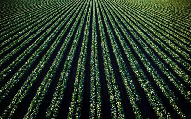Señalará México afectación severa a agricultura de EE.UU. con eventuales aranceles - Foto de Photo Tim Mossholder para Unsplash