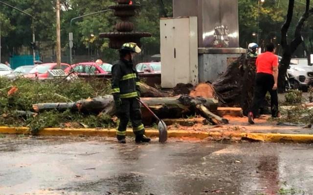 Al menos 45 árboles caídos en la Ciudad de México por lluvia - árboles caídos lluvia