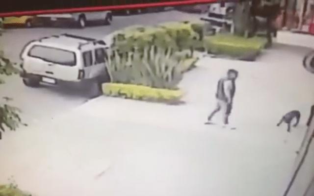 #Video Capturan a banda de ladrones de casas que fingían pasear a perro - Captura de pantalla