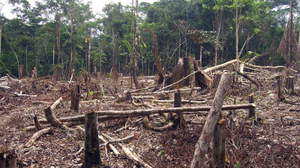 Deforestado, entre 90 y 95 por ciento de México - Foto de UNAM