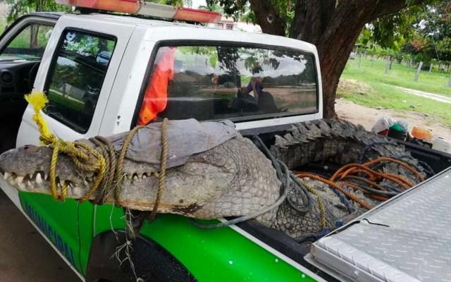 Capturan a cocodrilo de más de tres metros en Oaxaca - cocodrilo