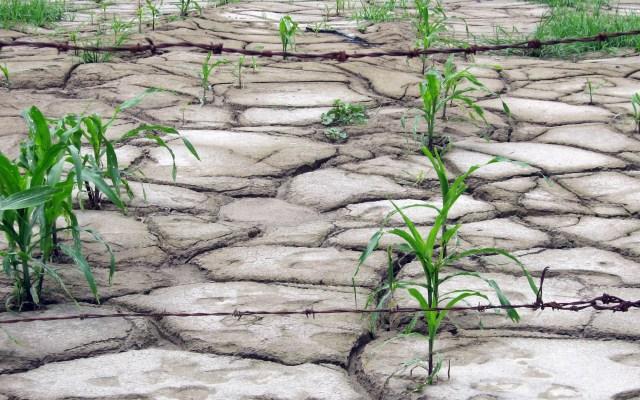 México es uno de los países con más riesgo a la desertificación - Desertificación del suelo. Foto de UNAM