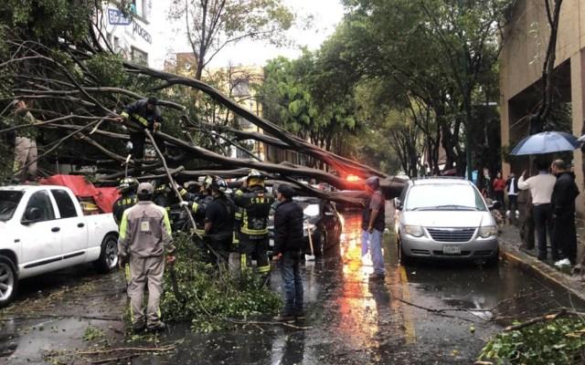 Fuerte lluvia provoca afectaciones en la Ciudad de México - árboles caídos lluvia