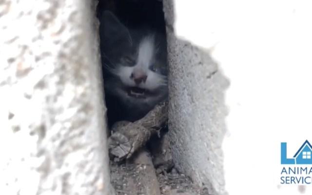 #Video Rescatan a un pequeño gato atrapado entre dos paredes - Gato gatito Los Ángeles